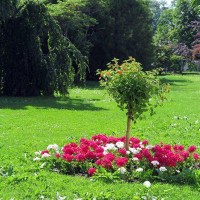 Blumenparadies Morges.